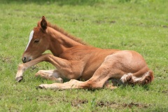 Foal photo by Taliesin, morguefile.com
