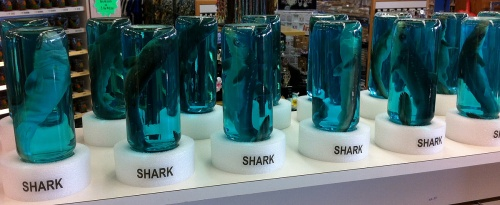 dog sharks in jars