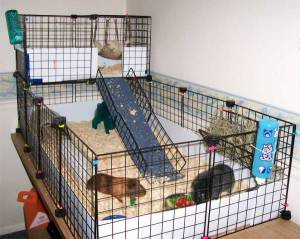Source: guineapigcages.com