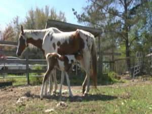 Twin Easter Foals, Tifton, GA