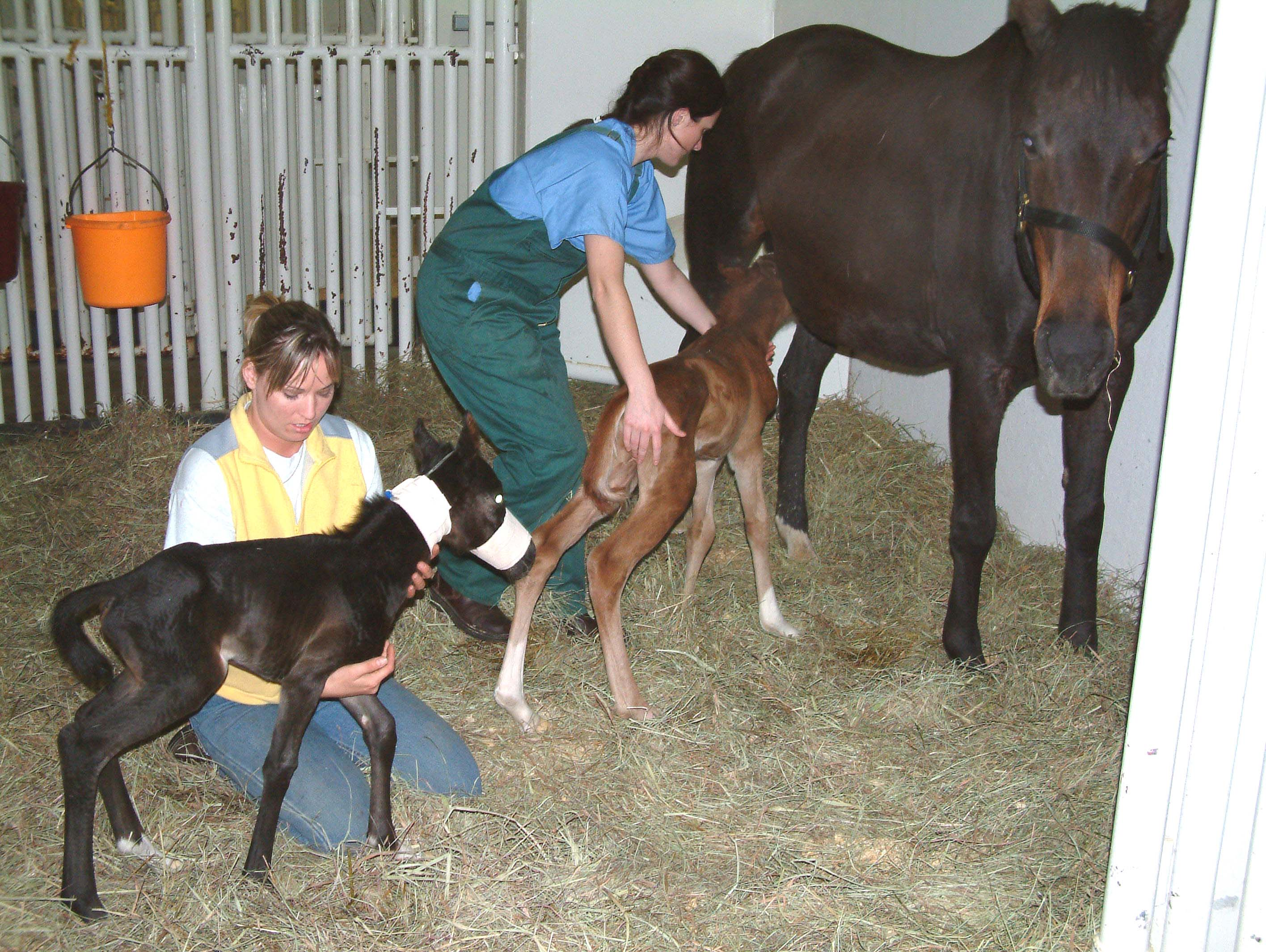 Twin Easter Foals Born to Underweight Mom | Animalfeasance