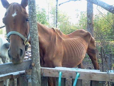 Moira NY Horse in Need