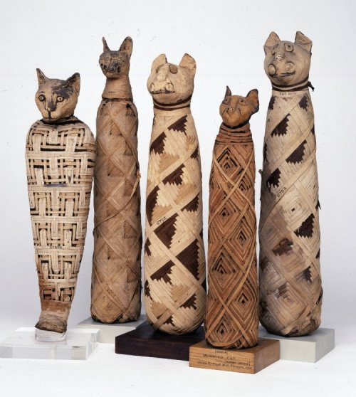 Cat mummies.  Source: British Museum.